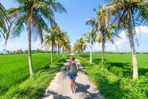Bali. Rice fields